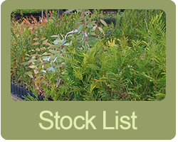 native plant seedlings stock list link